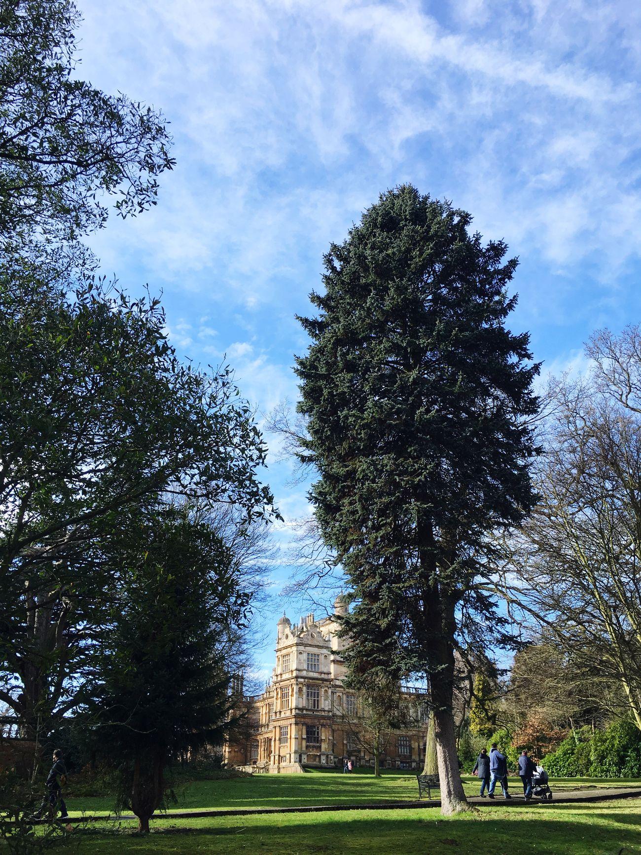 Tree Wollaton Hall Tudor History