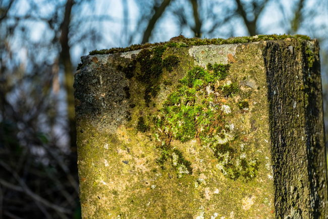 Moss and Post 03. Walking back from the beach and liked the light on the post. Fuji XT1 with 16mm. Edit in Lightroom . Bad Condition Beautyindecay Beautyineverything Check This Out Concrete Day Deterioration Eye4photography  EyeEm Gallery FUJIFILM X-T1 Light And Shadow Moss Moss & Lichen No People Outdoors Rough Stone Texture Textured  Textured  Textures And Surfaces Walking Around Zen