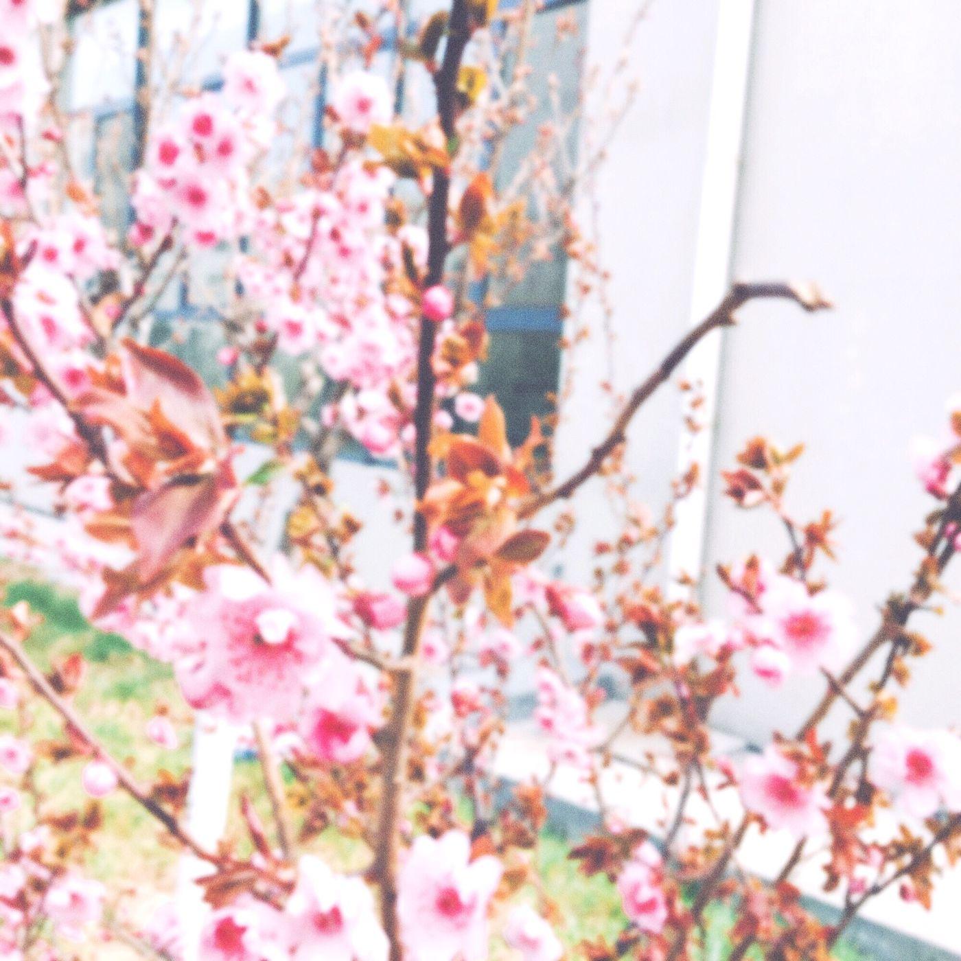 Taking Photos Enjoying Life Spring spring