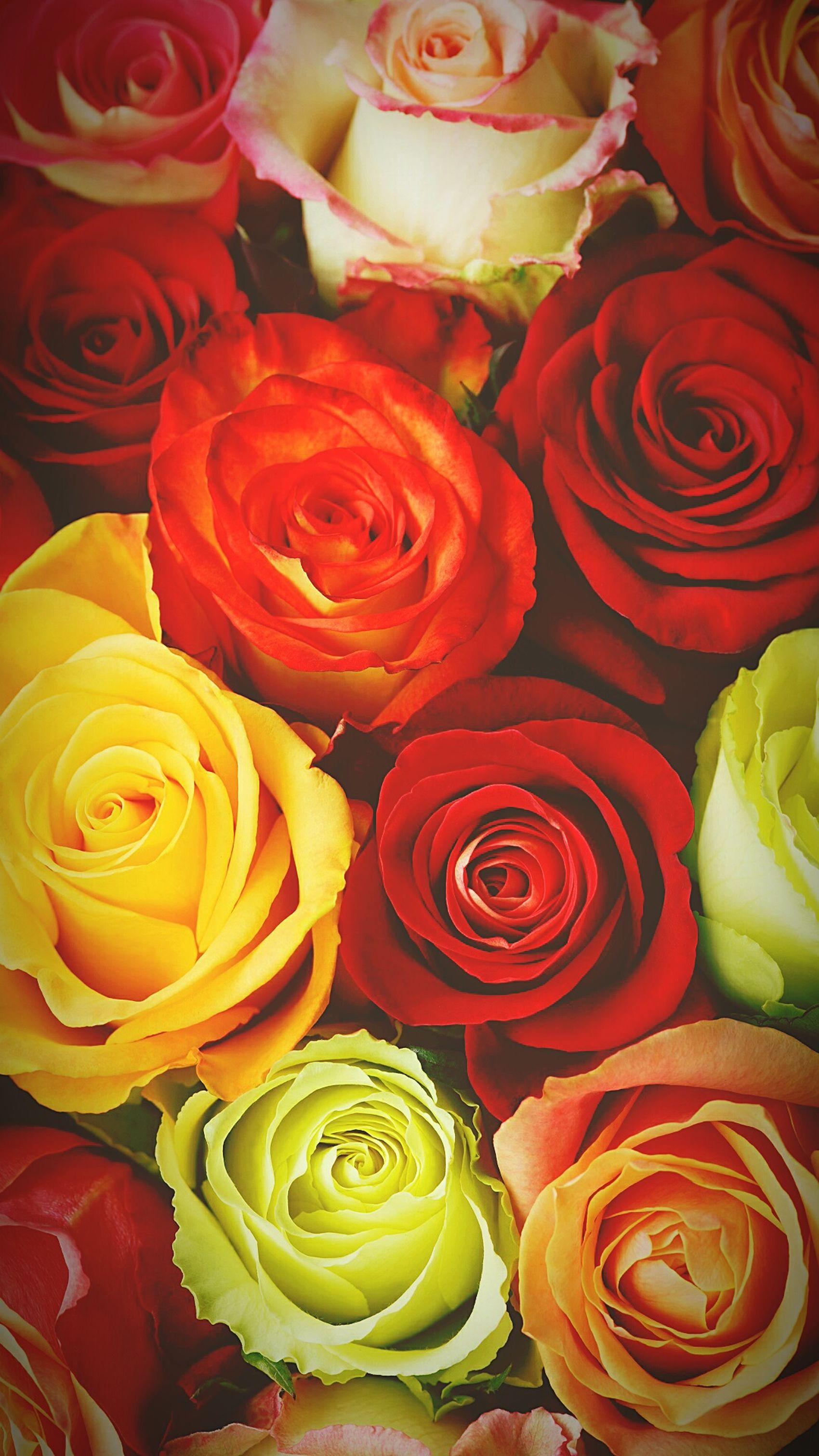 Flowers Rose Garden Colourporn Colours Of Nature Flower Photography Summer Blooms Vibrantpetals