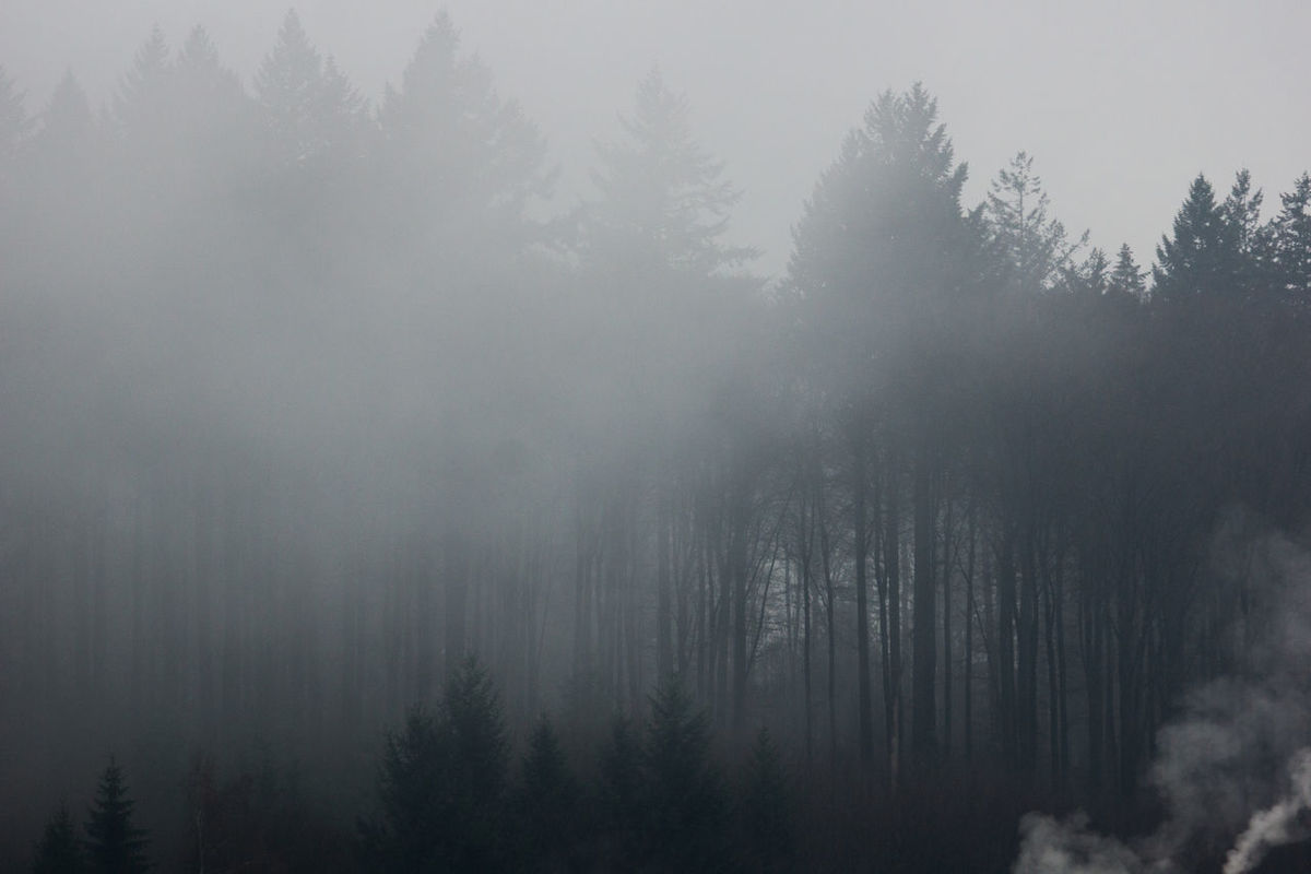 foggy morning Bad View Beauty In Nature Cold Temperature Day Dreary Dreary Weather  Fog Foggy Foggy Morning Forest Groom Growth Hazy  Idyllic Landscape Mist Mystic Nature No People Outdoors Scenics Sky Tranquil Scene Tranquility Tree
