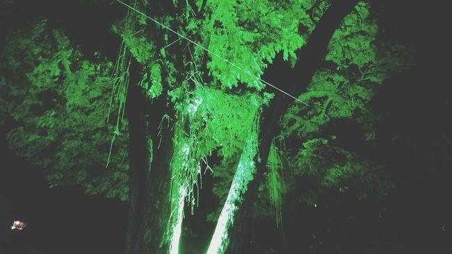 Green Neon Lights Neon Trees