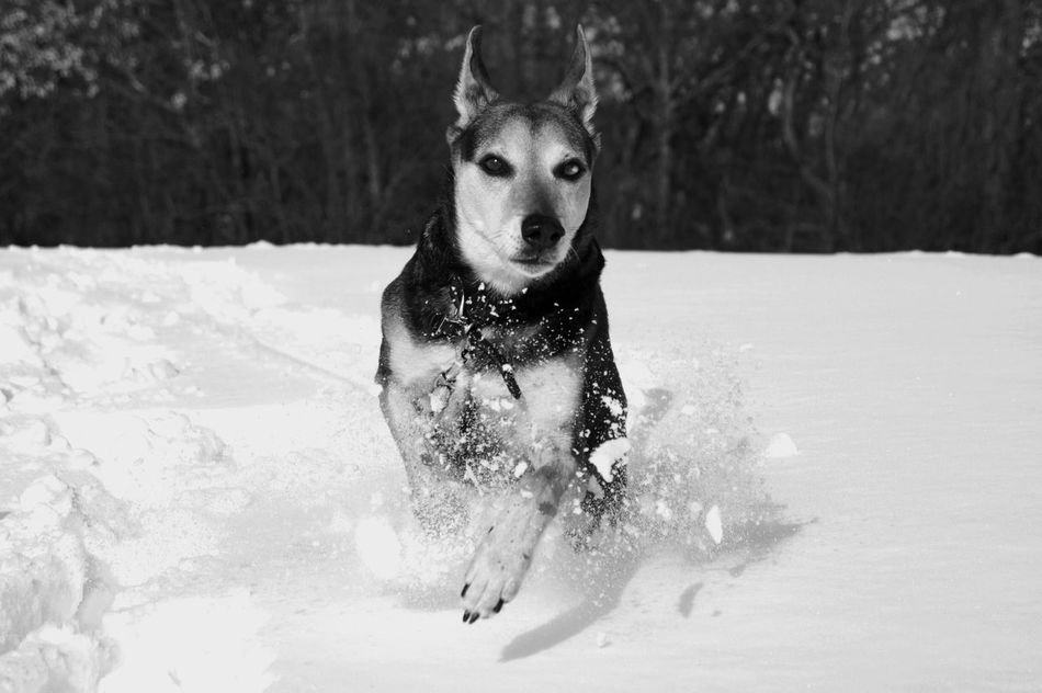 Cold Temperature Dog Domestic Animals Nature No People One Animal Outdoors Pets Winter