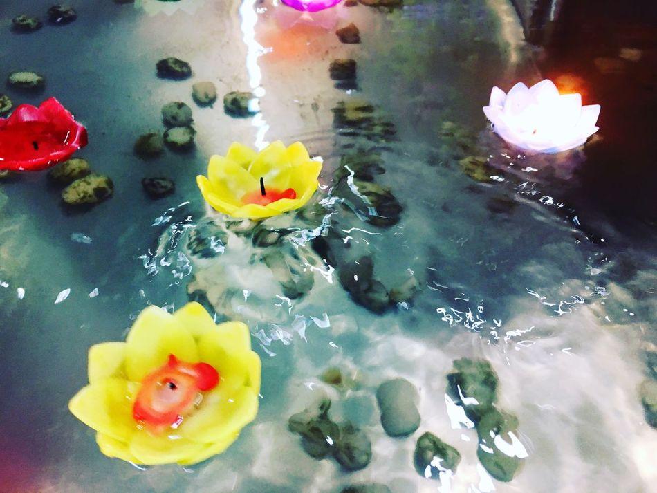 บัวลอย บัวลอยในตำนาน Water Flower Floating On Water Wet Floating Fragility Petal Yellow Freshness No People Waterfront Swimming Lily Pad Nature Flower Head Outdoors Close-up Beauty In Nature Day