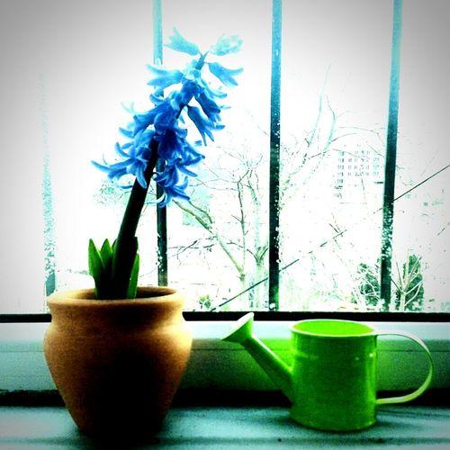 Purple Flower Wateringcan Flowerpot Window Beautiful Nature