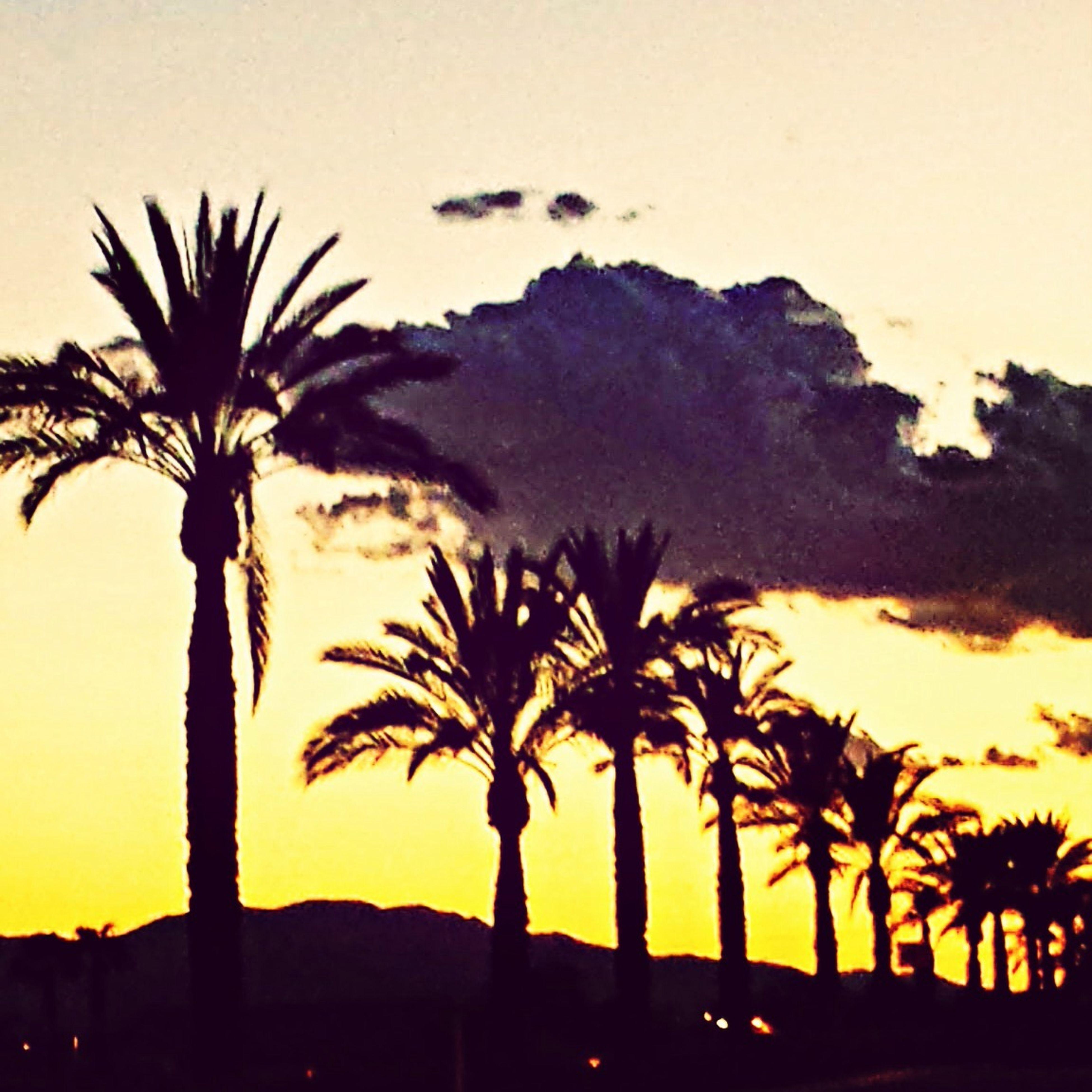 HotelCalifornia Desert