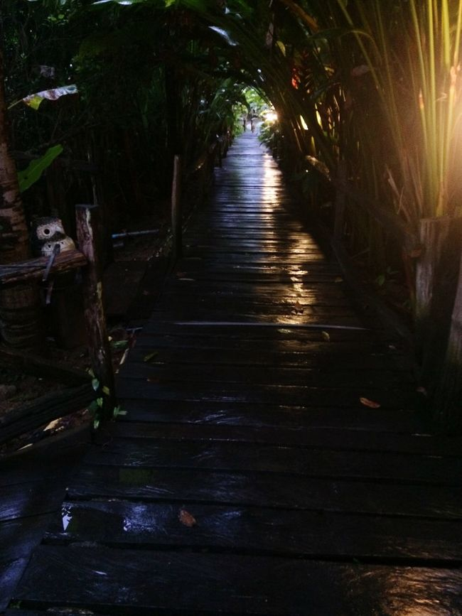 after rainy View Bridge Way Beautiful Nature Beautiful Bridges Green Eyes EyeEm Thailand Thailand