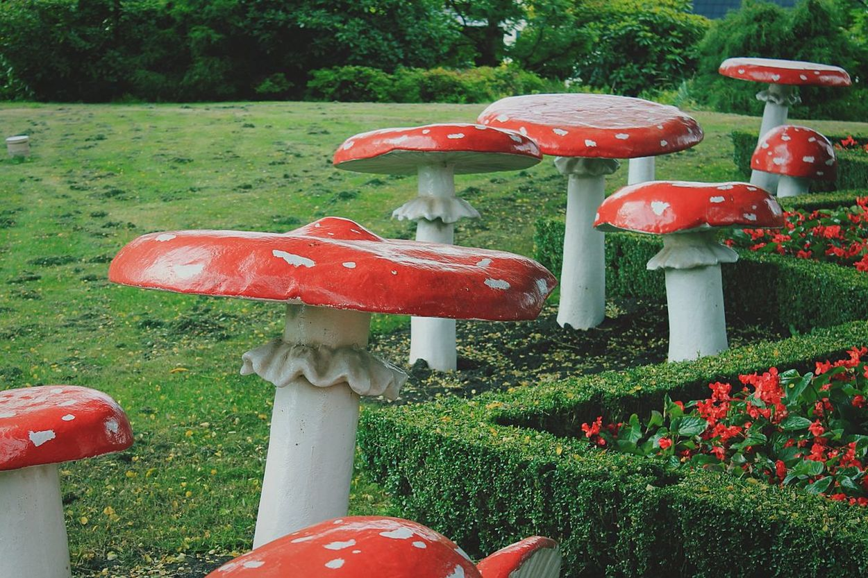 Alice In Wonderland Mushroom Art Mushrooms Made Of Wood Creative World Creative Gardening Color Photography I Live In An Unreal Fairytale ✨ Wood Art WoodArt