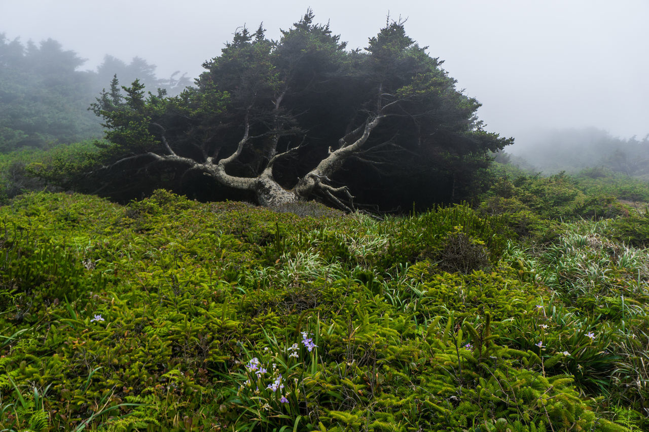 tree, nature, growth, tranquility, no people, beauty in nature, outdoors, day, tranquil scene, scenics, plant, forest, mountain, landscape, sky, dead tree