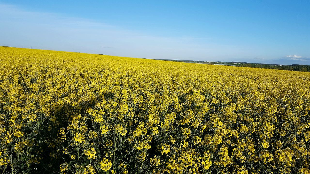 Agriculture Rural Scene Beauty In Nature Yellow Sky Nature No People