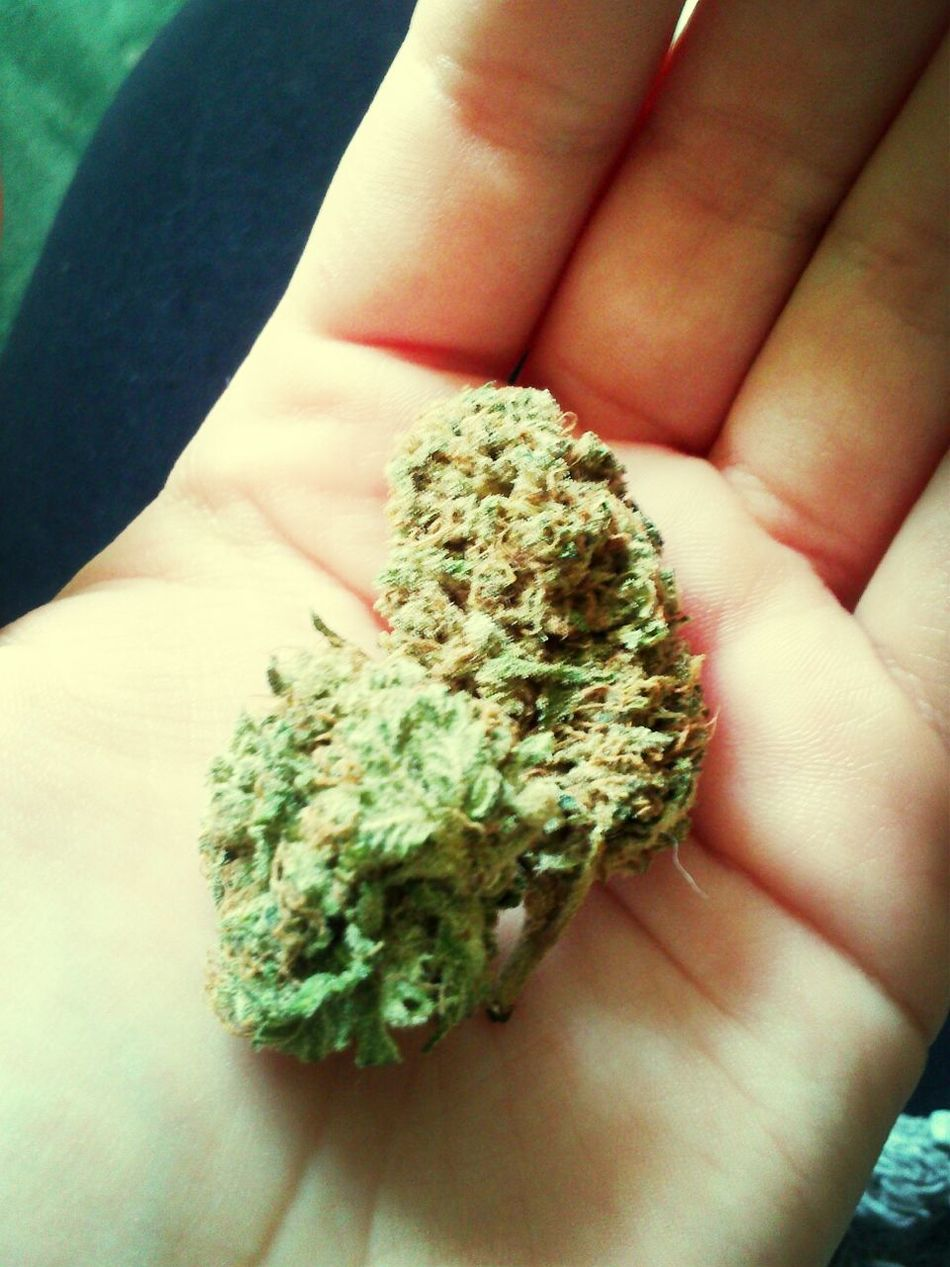 Weed #skéro Czechweed First Eyeem Photo