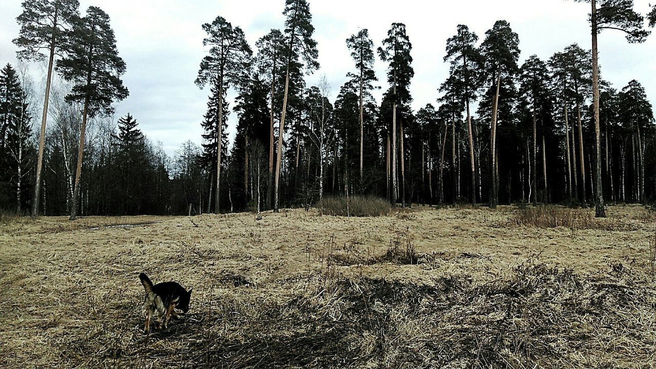 Dog Forest Pets One Animal No People Holiday Walking Running Dog