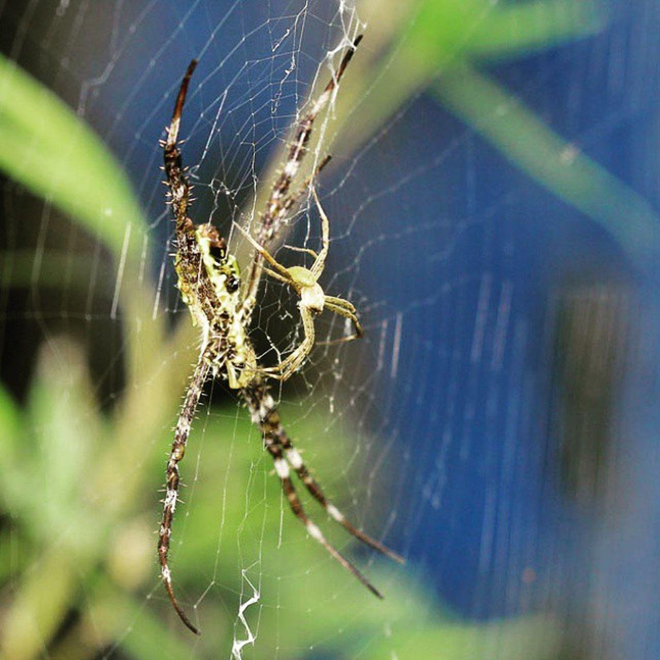 Mom and Kid. Spider Spiders Spiderworld Ig_spiders ig_spider