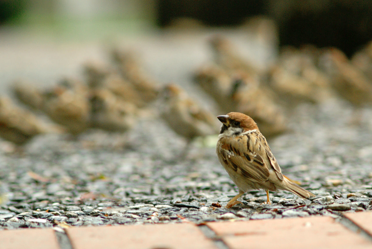 Where is my food ? Bird City, EyeEmNewHere Focus On Foreground Food Group Nature Outdoors Sparrow Wildlife