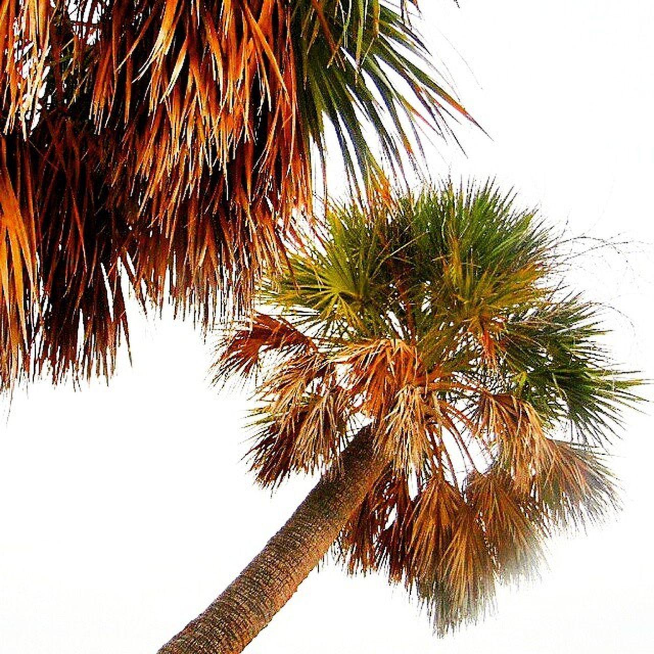 Palm City✌ Princely_shotz Precious_shotz Ig_captures Mycapture infinity_shotz alalamiya_mystics all_shots fotografdukkanim alalamiya allnatureshots ig_naturegallery skysultans nature_sultans natureelite shot_flair ig_all_americas majestic_earth insta_souls ig_naturelovers natureelite igs_world igs_asia igs_africa majestic_earth ig_eurasia ig_mood ig_today loves_bestpic loves_bestsky worldclassshots nature stellar_shots