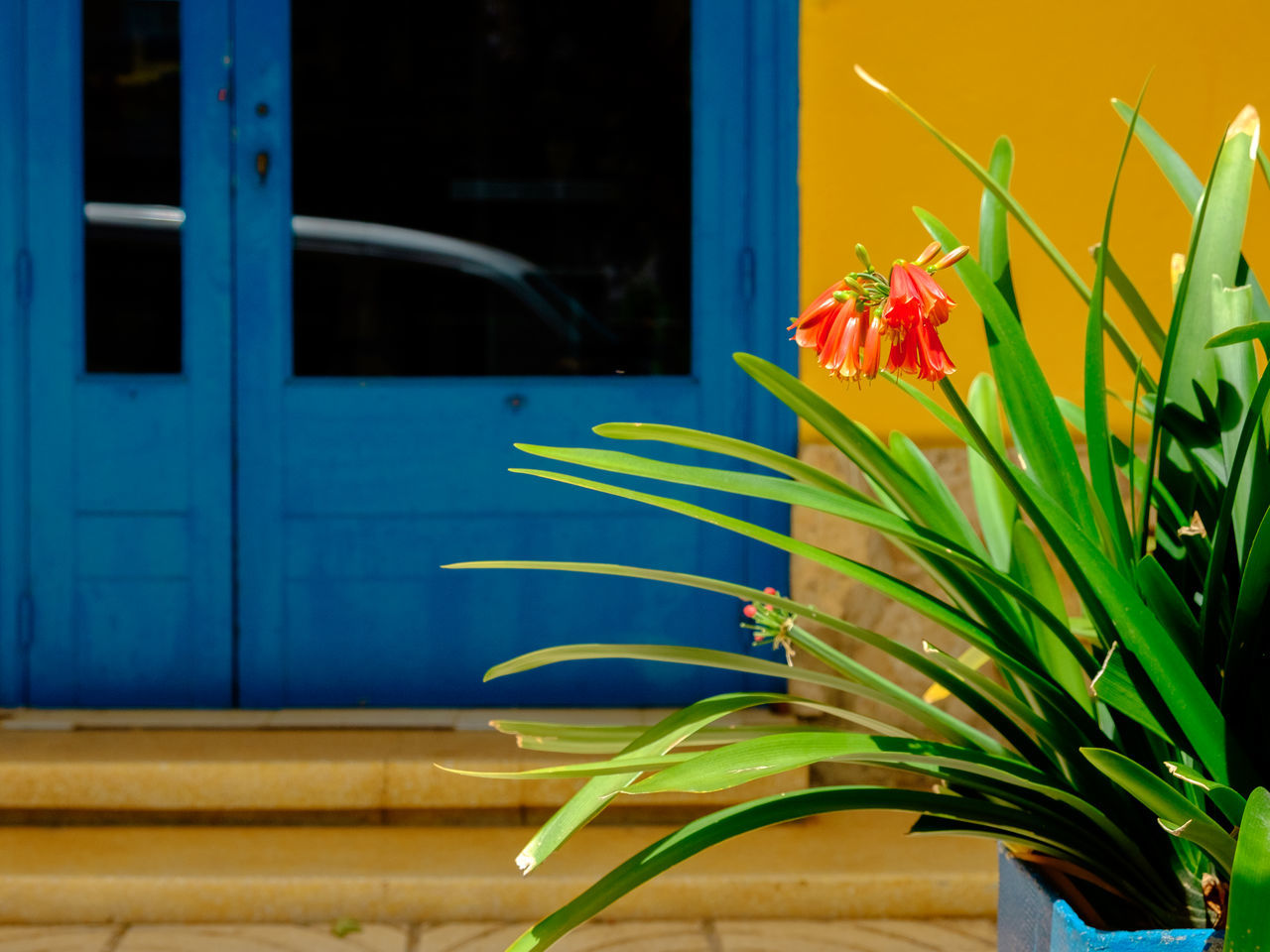 Hockney Architecture Beauty In Nature Blue Close-up Day Flower Flower Head Fragility Freshness Growth Leaf Live For The Story Multi Colored Nature No People Outdoors Plant Red Summer Window Yellow