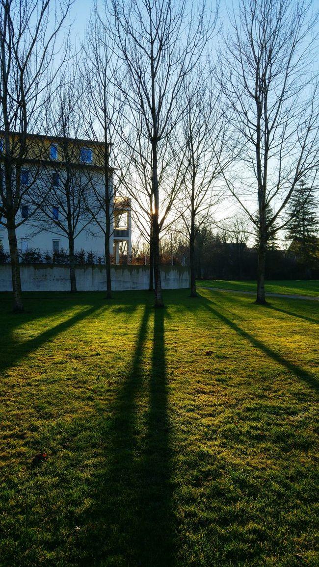 Sunday sun. Bavarianskies SundayFunday December Sun