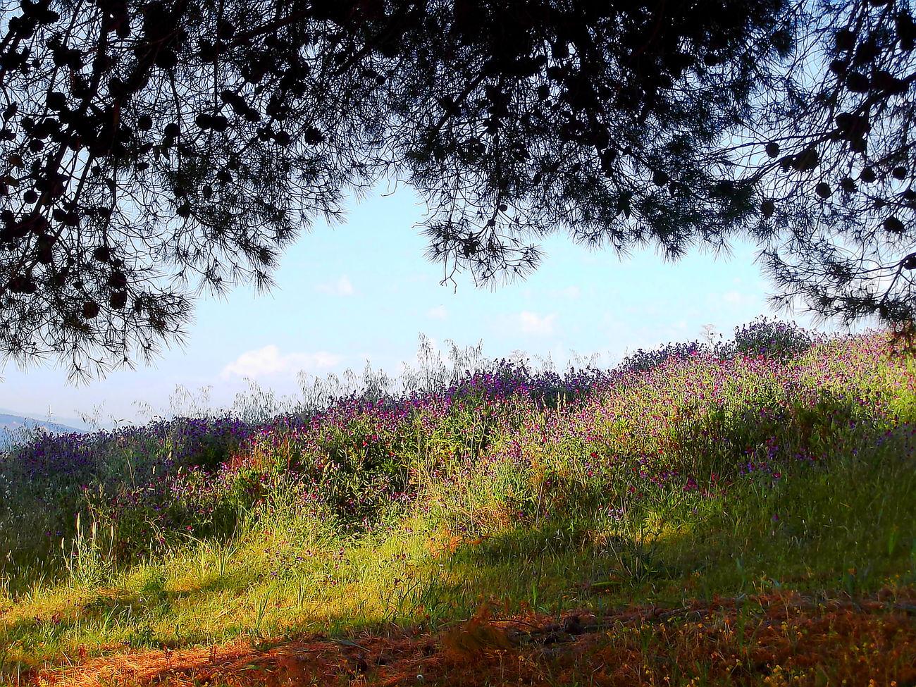 Agrigento Alberi Beauty In Nature Cielo Azzurro Erba Field Fiori Flower Fragility Freshness Growth Nature No People Nuvole Outdoors Plant Scenics Sicilia Silohuette Tranquility Tree Vegetazione