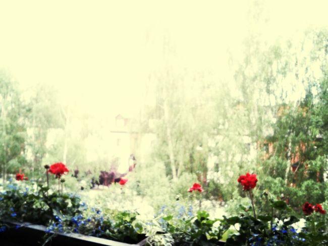 Ugly Weather Balcony Beautiful Flowers