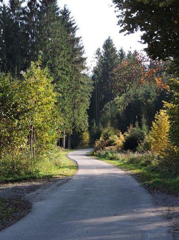 Der Weg ist das Ziel Wald Wege Gabelung Bäume Forest Tree Trees Way Streetphotography