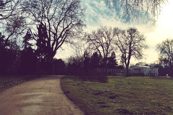 Walking Around Relaxing Landscape Trees Park Clouds And Sky Park Sanssouci