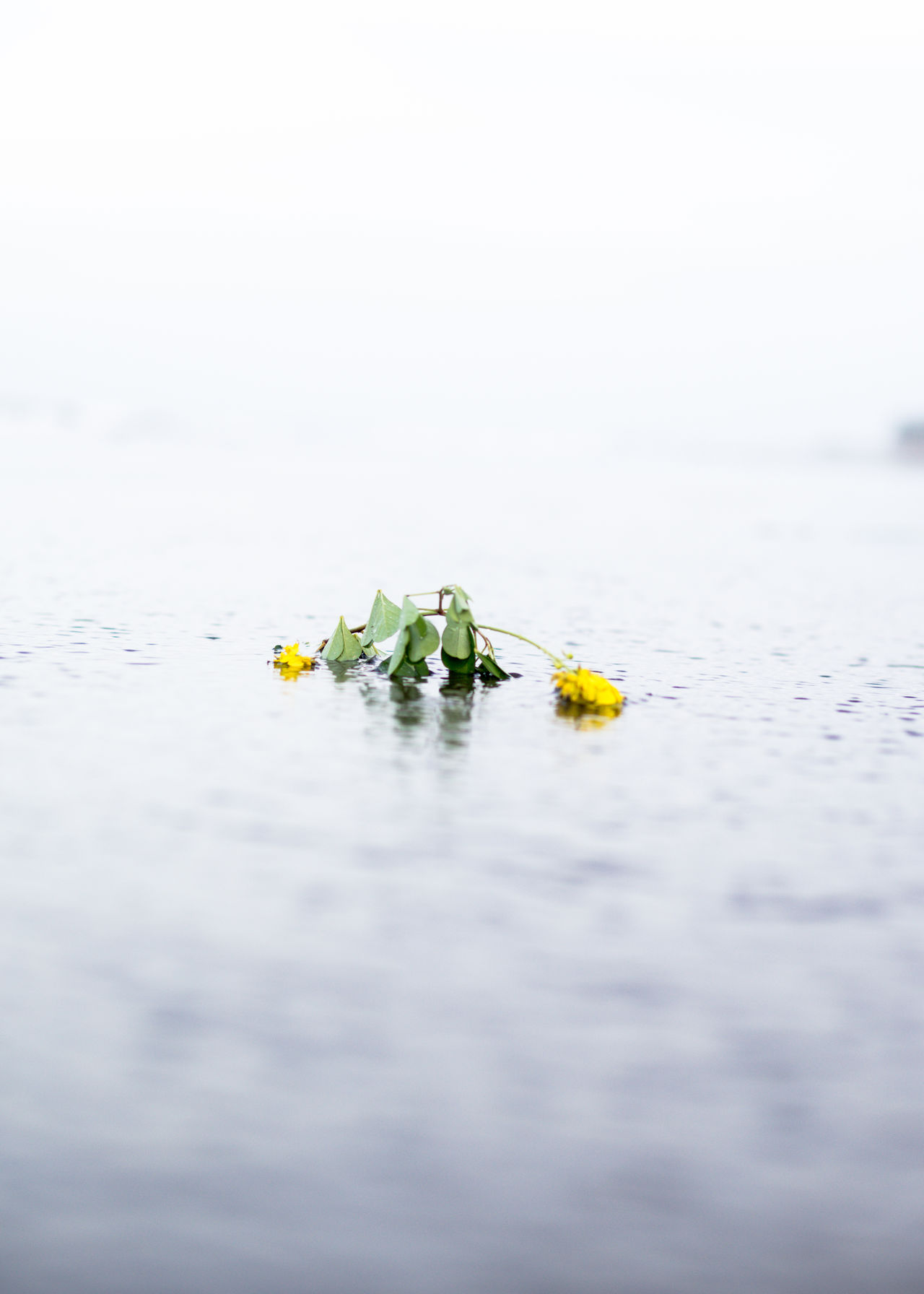 Abstract Photography Animal Themes Animal Wildlife Animals In The Wild Beauty In Nature Close-up Conceptual Photography  Day Fine Art Photography Floating On Water Flower Flowers Fragility Minimal Nature No People One Animal Outdoors Scenics Water Water Reflections Water_collection Yellow