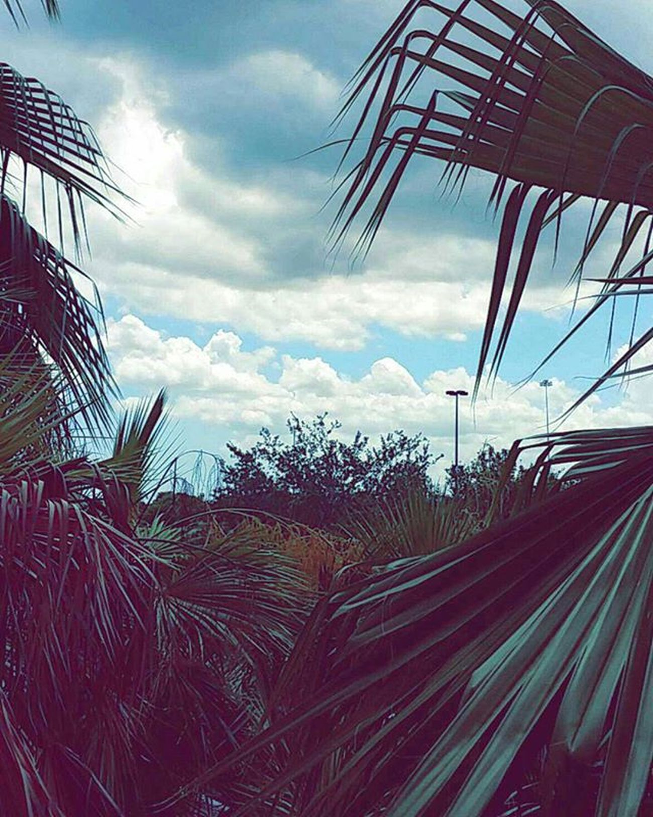 My old view over the summer. FIU Fiuhousing Fiueverglades Sky Palm Palms Palmtrees Miami Sweetwater Florida