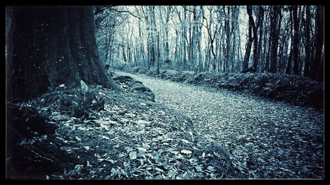 Leafy Lane Leafy Path Leafy Lane Lane Blue Landscape Winter's Coming Leading Lines Learn & Shoot: Leading Lines The Places ı've Been Today Untold Stories Sorrowscapes