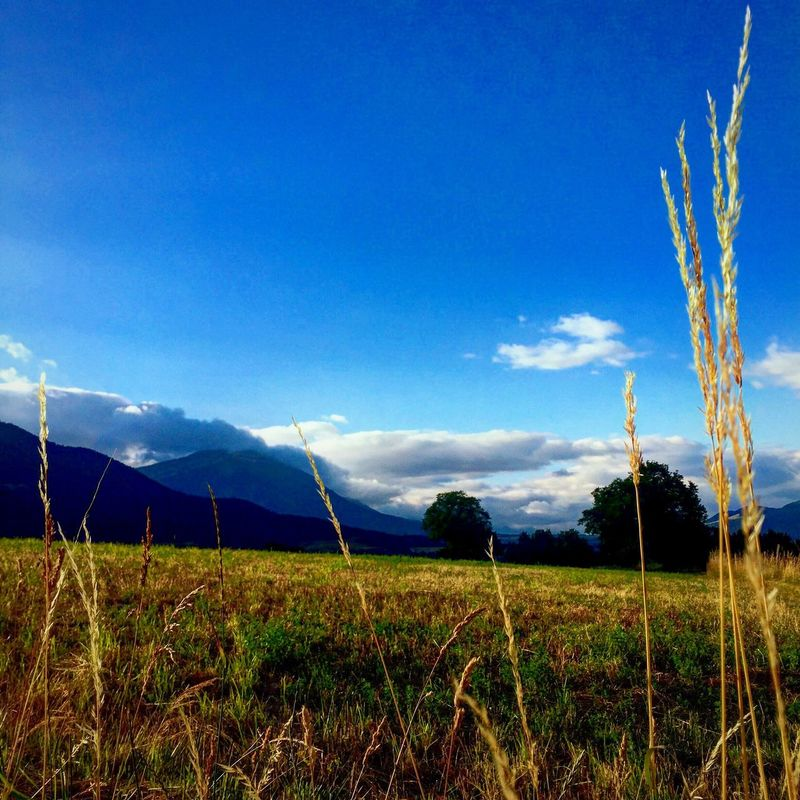 Field Blue Nature No People Sky Landscape Tranquility Tranquil Scene Beauty In Nature Outdoors Day Growth Scenics Grass Tree Vapor Trail Mountain Mountain View Grenoble Dark Summer Sunrise Darkness Rural Landscape_Collection