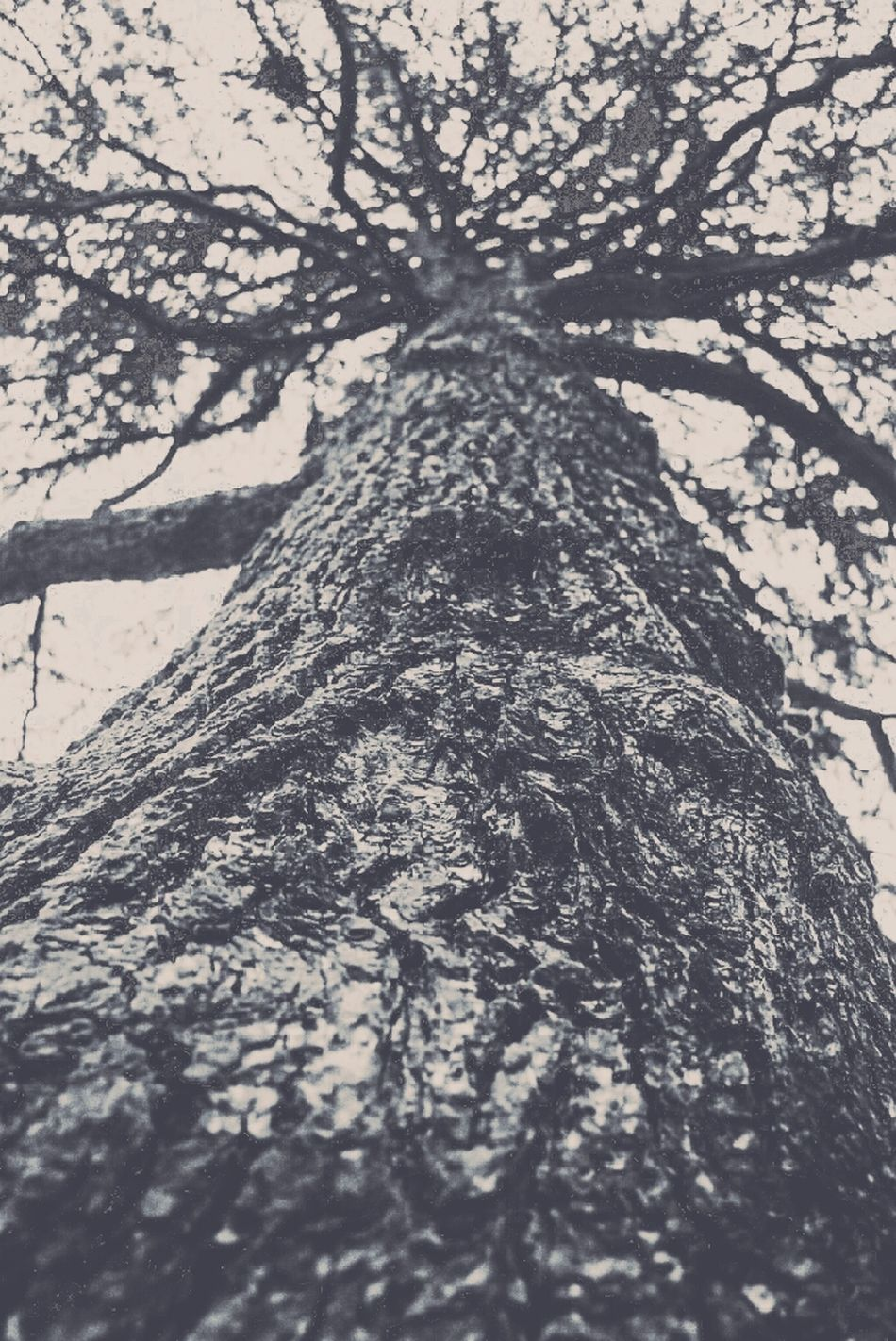 Took this at Bradgate Park, Leicester. Taken with my Nikon F60. Close Up Tree Vintage Photo NikonF60