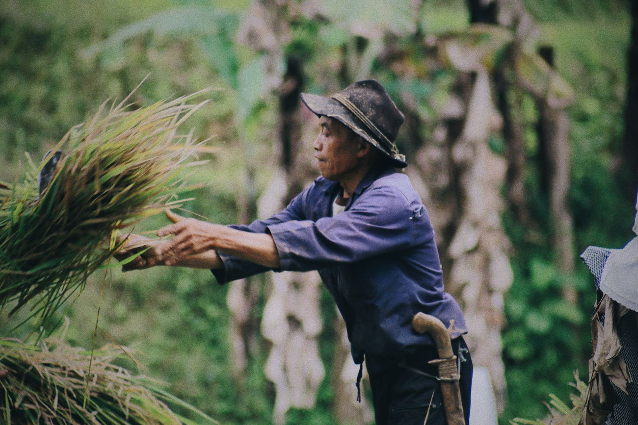 Farm.. Real People Agriculture Field One Person Farmer Working Men Outdoors Day Occupation Lifestyles Nature Fisherman Rural Scene Rice Paddy Adult Adults Only People Only Men Nature INDONESIA