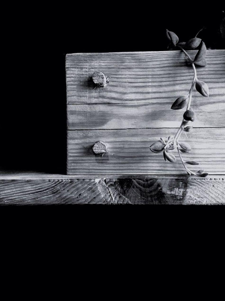 Flower Box Wood B&w