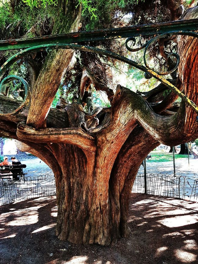 Tree Footpath Tranquility Tree Trunk Day Arch Tranquil Scene Water Outdoors Scenics Weathered Park Non-urban Scene No People Pedestrian Walkway History Famous Place Plant Low Angle View Lisboa Tree_collection  Arvore Tronco