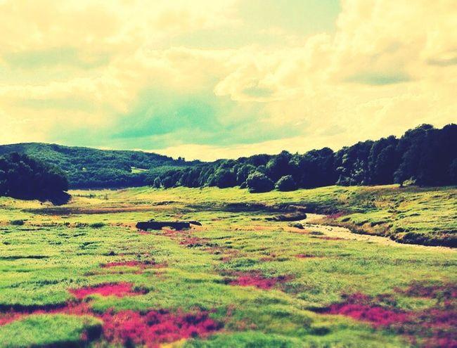 Colourful Nature Landscape Flowers