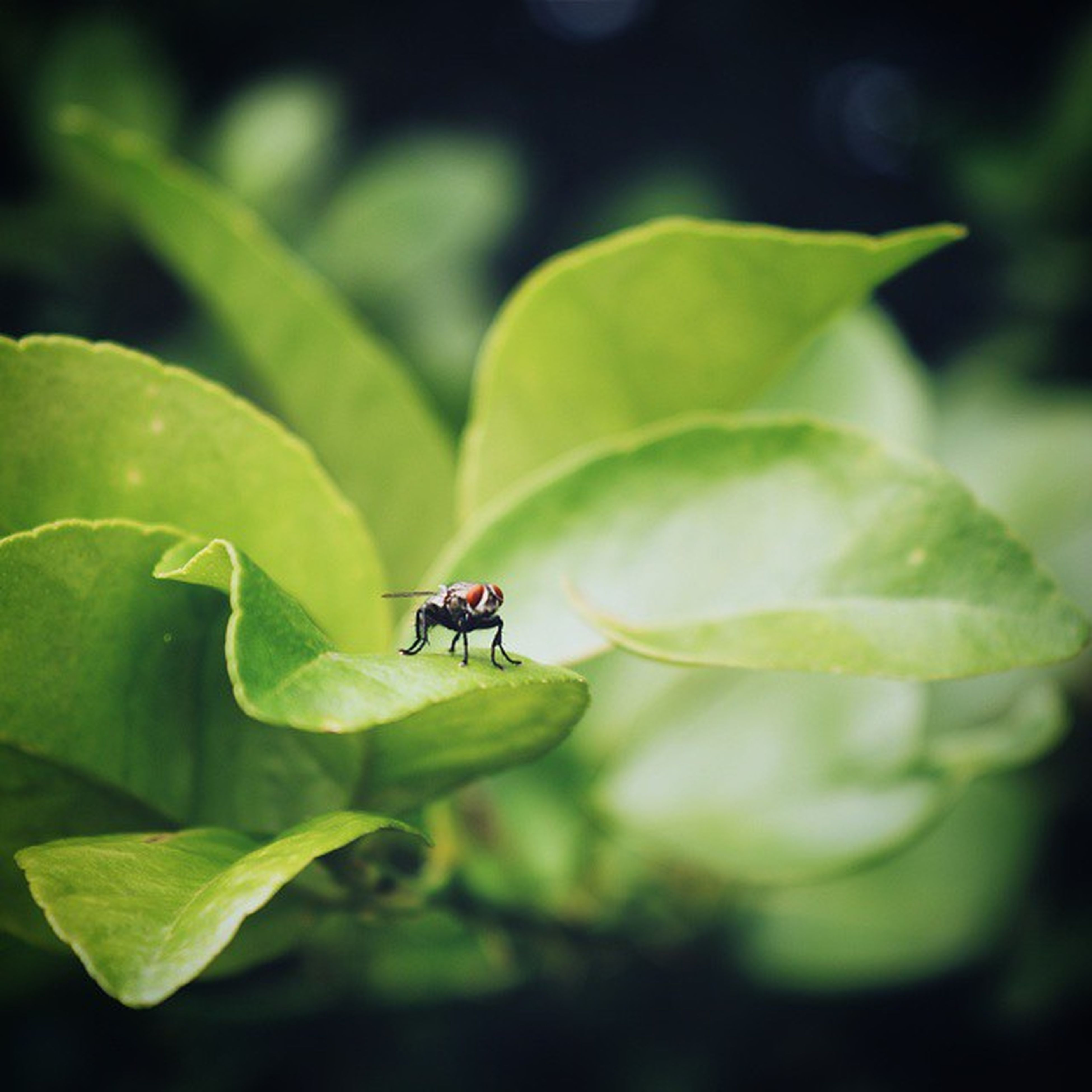 insect, animal themes, one animal, animals in the wild, wildlife, green color, leaf, selective focus, close-up, plant, nature, focus on foreground, growth, two animals, day, outdoors, zoology, no people, beauty in nature, full length