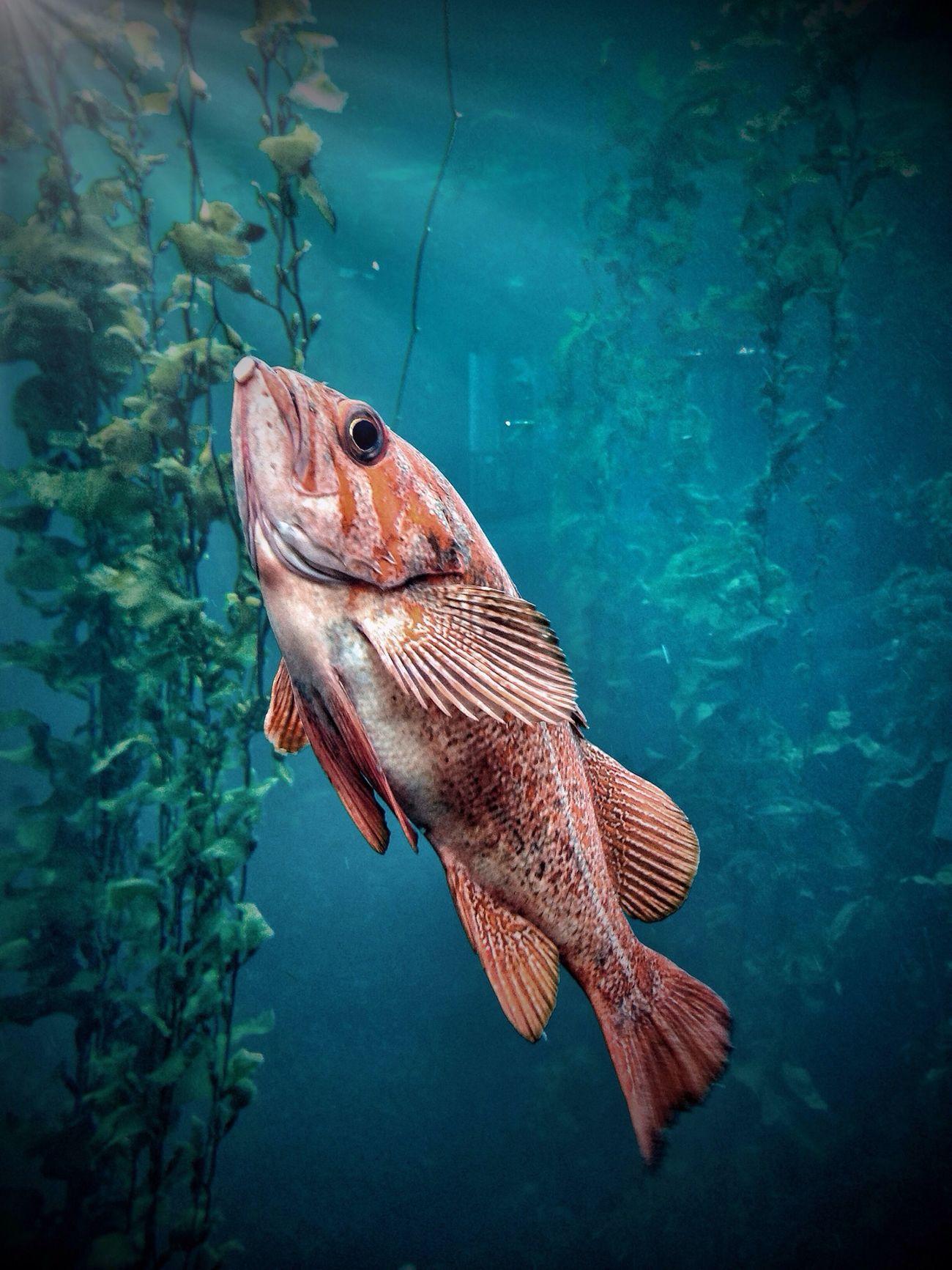 HDR Hdriphoneography Monterey Bay Aquarium