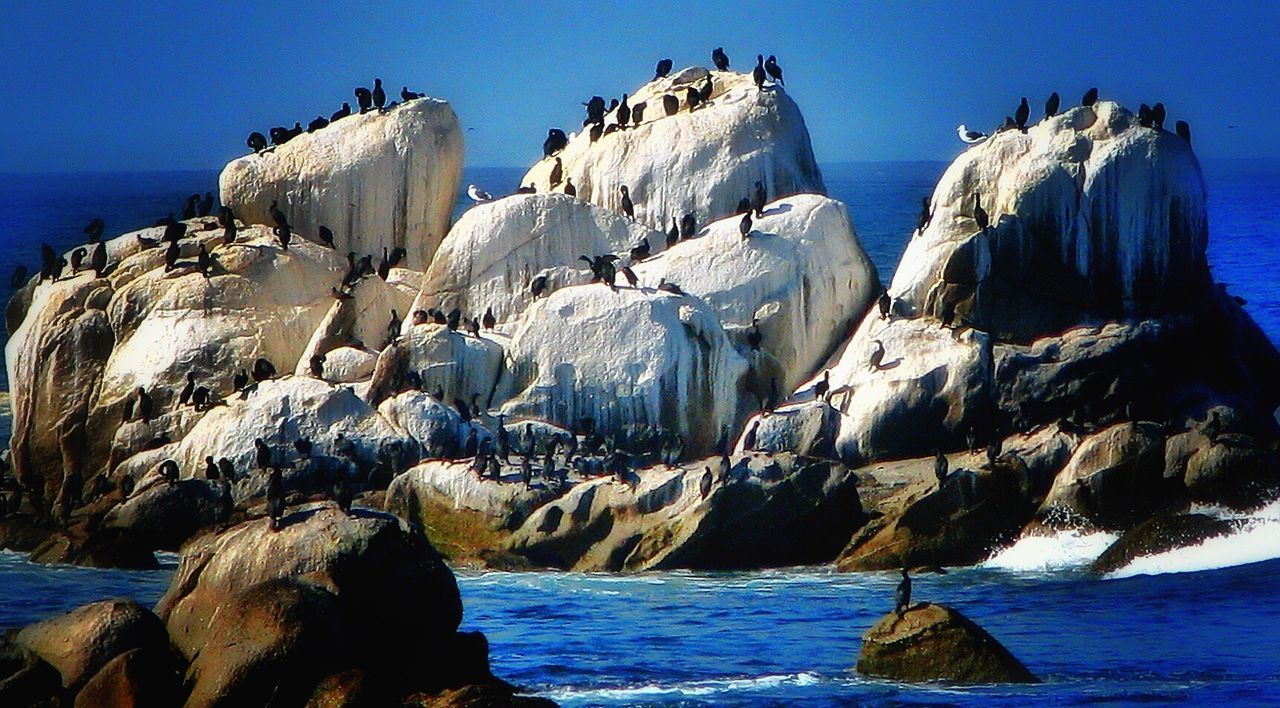 Monterey Bay Aquarium Monterey CA🇺🇸 Birds Poop-a-plenty Pacific Ocean California Coast Big Blue Sunshine ☀ Sea And Sky Beauty In Nature