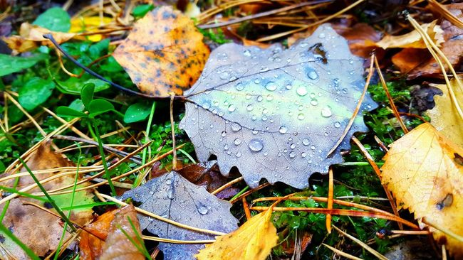 Leaf 🍂 Nature Photography Popular Photos Mobile Photography Nature Przyroda Природа Nature_collection Mobile Artist Macro Photography