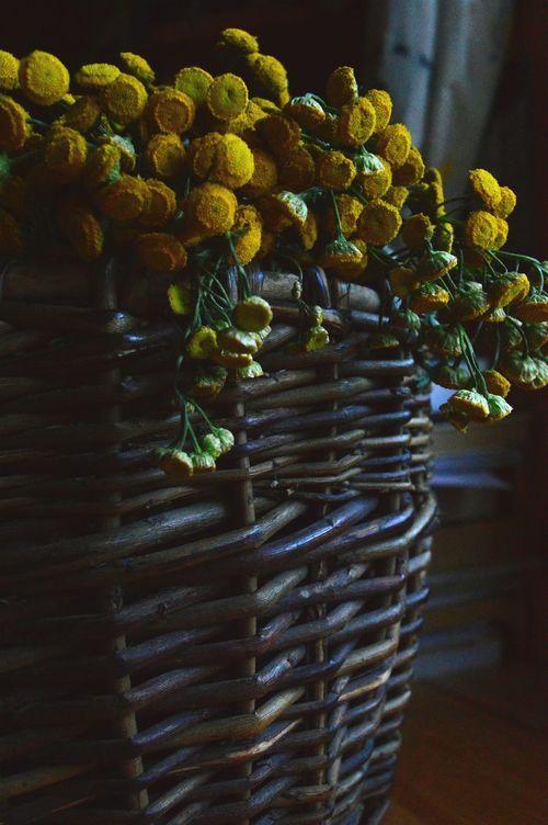 Eyemphotography Eyemnaturelover Summerfeeling Calmlife Enjoy Flowers Camomille Healthy Country Lovelyplace Teatime 🌿🌻🍵♥