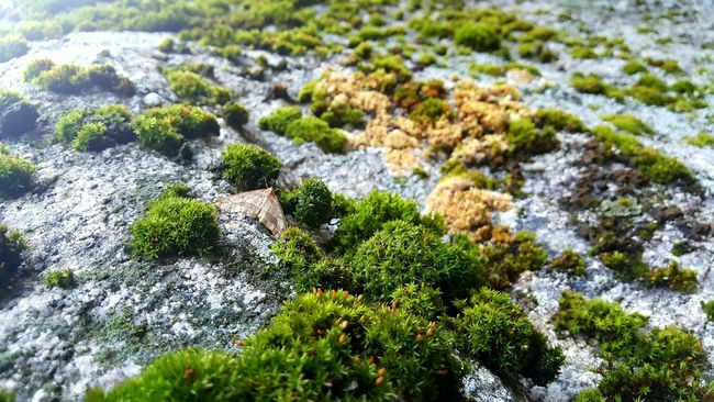 Nature Growth Day High Angle View No People Outdoors Sunlight Plant Beauty In Nature Close-up Tree Moth Moss Fall Freshness Mountain Beauty In Nature Micro Small Detail