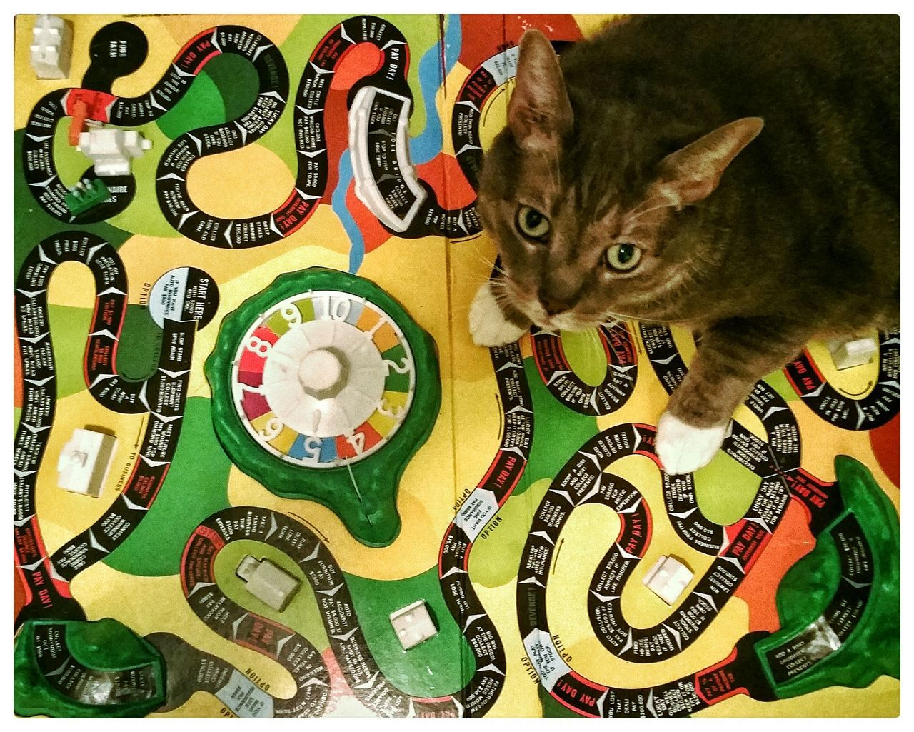domestic cat, one animal, pets, domestic animals, gambling, animal themes, indoors, no people, mammal, portrait, gambling chip