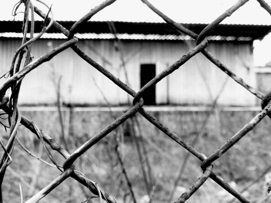 Fence Mesh Wire Fence Close-up Old Abandoned Abandoned Buildings Abandoned Places Bushes Open Door EyeEm Best Shots Taking Photos Steel Wasiak Moto X Creative Creativity Black And White Black & White Street Photography B&w Street Photography Showcase: February