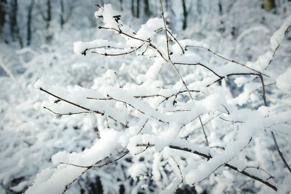 Beautiful stock photos of snow, Beauty In Nature, Berlin, Close-Up, Cold Temperature