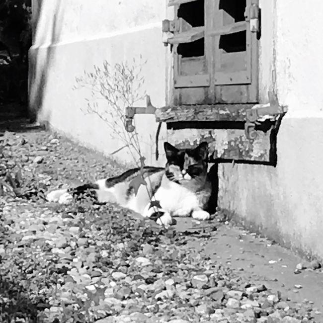 Cat Katze Animals Sonnenschein  Genießen Enjoying The Sun Enjoying Life