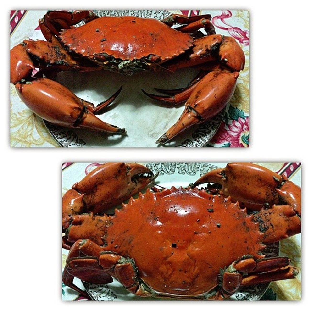 I'm going to eat you decepticon-like crabby! 😲Thanks to Lolo Wilson! 😍Crabfest Crabwasted