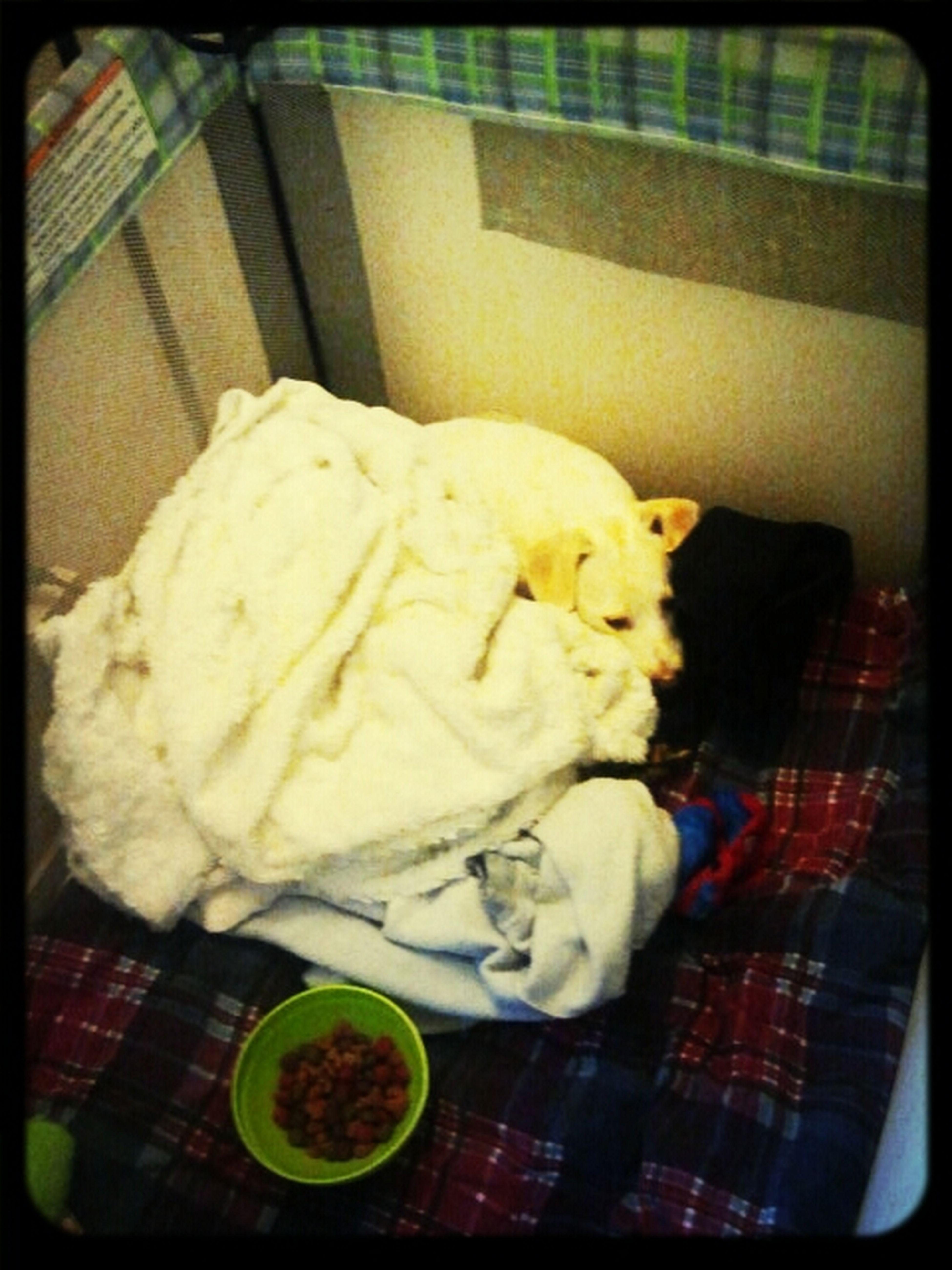 Sleepy Pup <3 My Morrison