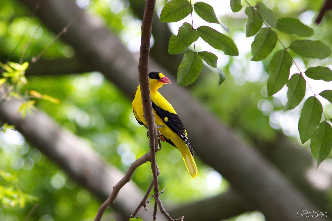 Metro Zoo Birdie
