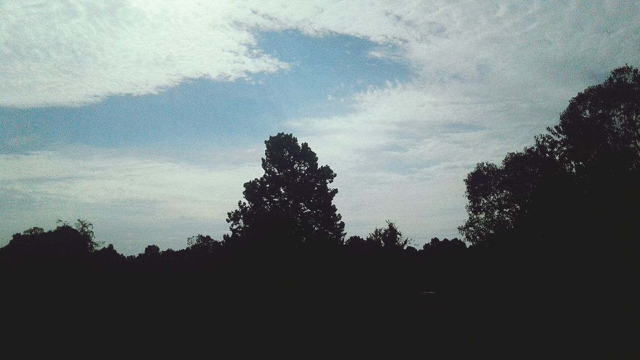 Tree Sky Silhouette Low Angle View Tranquility Outline Tranquil Scene Cloud Growth Scenics Nature Beauty In Nature High Section Dark Non-urban Scene Day Blue Majestic Outdoors Solitude
