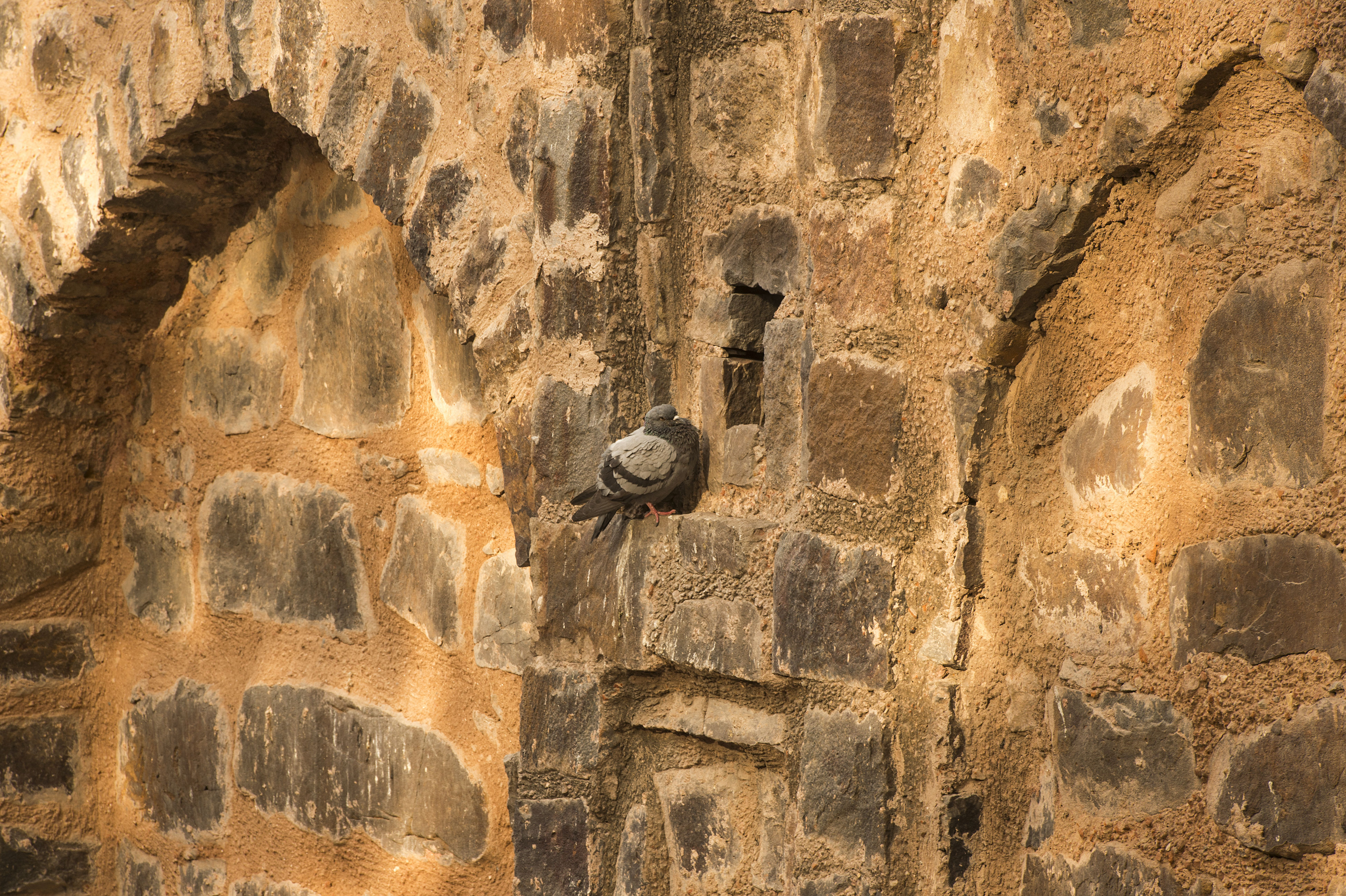 ancient, architecture, history, built structure, no people, outdoors, day, building exterior, bird, ancient civilization, bat - animal, nature, time, animal themes, close-up