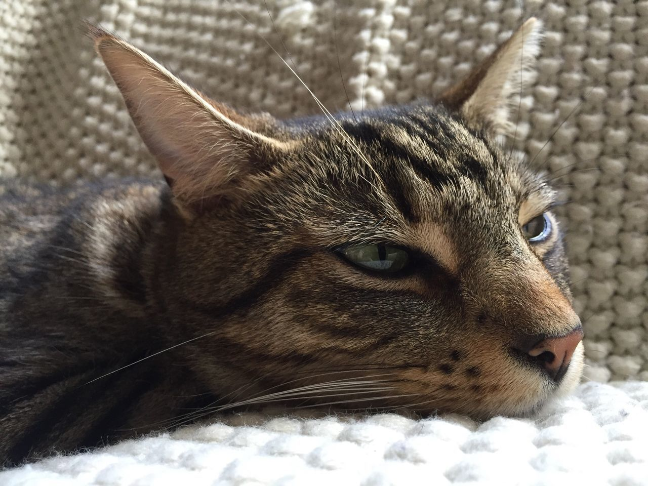 Check This Out No Edit/no Filter Motus Natura Pets Corner Pet Photography  Iphone 6 Cambridgeshire Things I Like The Week On Eyem Bengal Cat Pet Cat Cat♡ Cat Lovers Cats Of EyeEm
